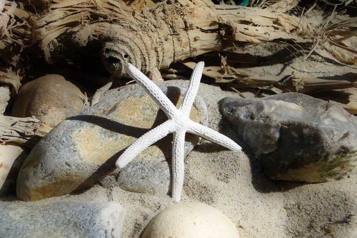 sea star hairclip