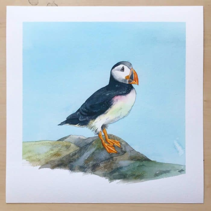 high quality giclée puffin print on watercolour paper
