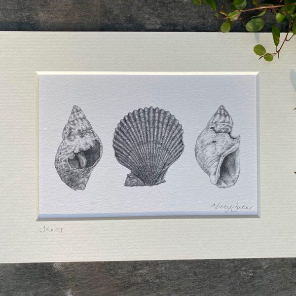 shells fine art pencil drawing print