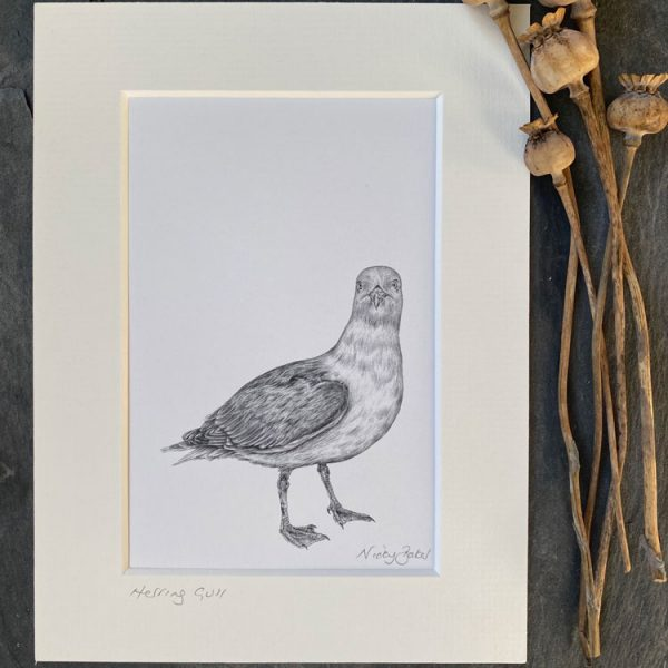 seagull fine art pencil drawing print